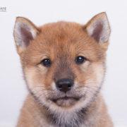 Puppy_2 (3)